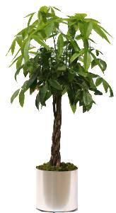 Moneytree-brshdchrome